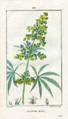 Botanical Print - Hemp (No. 10100110)