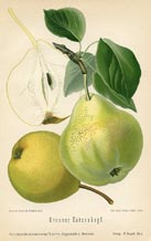 Fruit Prints - Pears (No. 10730075)
