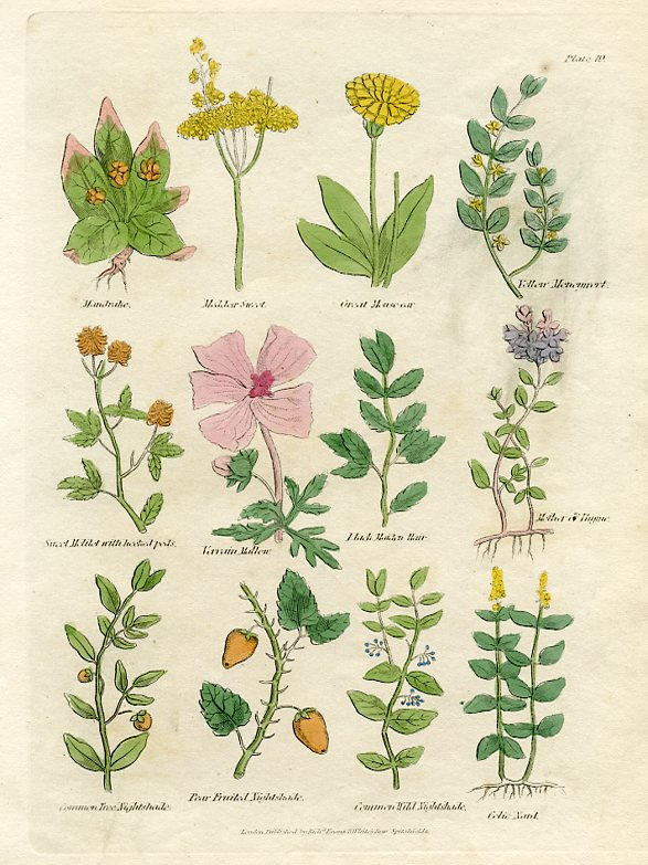 Mallow, Thyme, Nightshade