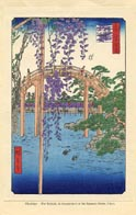 Botanical Prints - Wisteria (No. 11310011)