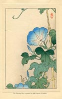 Botanical Prints - Morning Glory (No. 11310013)