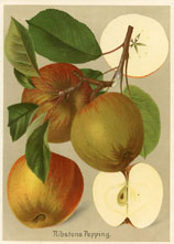 Fruit Prints - Apples (No. 11430111)