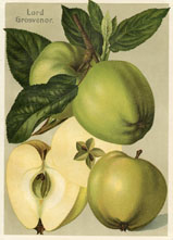 Fruit Prints - Apples (No. 11430118)