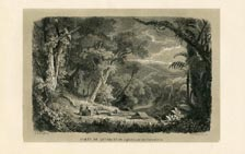 Forest Print (No. 11861002)