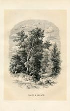 Forest Print (No. 11861008)