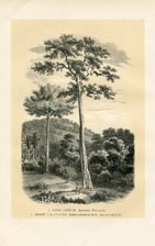 Bark Cloth Tree Print (No. 11861009)