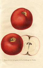 Fruit Prints - Apples (No. 11890721)