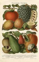 Fruit Print (No. 61310102)