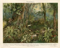 Tropical Plant Print (No. 61310106)