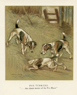 Dog Prints - Fox Terriers (No. 61220008)