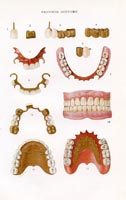 Dental Print (No. 61340018)