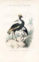 Bird Prints - Crane (No. 20670027)