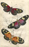 Butterfly Print (No. 21450011)