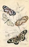 Butterfly Print (No. 21450012)