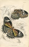 Butterfly Print (No. 21450014)