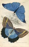 Butterfly Print (No. 21450022)