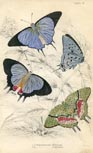 Butterfly Print (No. 21450026)