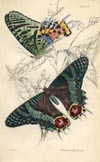 Butterfly Print (No. 21450028)