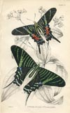 Butterfly Print (No. 21450029)