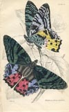 Butterfly Print (No. 21450030)