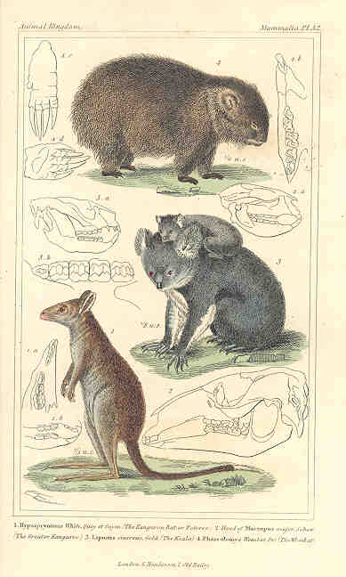 Kangaroo, Koala and Wombat