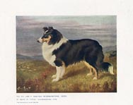 Collie Print (No. 21880008)