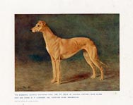 Greyhound Print (No. 21880011)