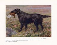 Retriever Print (No. 21880013)