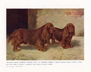 Sussex Spaniel Print (No. 21880014)