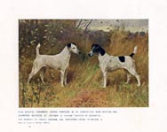 Fox Terrier Print (No. 21880015)
