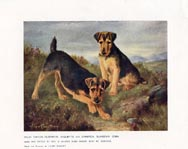 Welsh Terrier Print (No. 21880016)