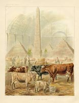 Dairy Farming Prints - Cows (No. 22210001)
