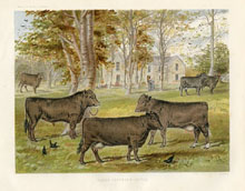 Dairy Farming Prints - Cattle (No. 22210006)