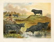 Dairy Farming Prints - Cattle (No. 22210008)
