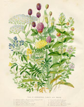 Dairy Farming Prints - Foraging Plants (No. 22210019)
