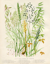 Dairy Farming Prints - Foraging Plants (No. 22210021)