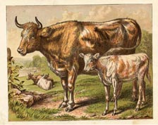 Mammal Prints - Cow (No. 22260002)