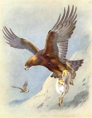 Golden Eagle Print (No. 22280032)