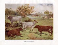 Cattle Print (No. 22390011)