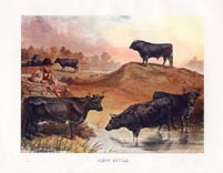 Cattle Print (No. 22390014)