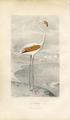 Bird Prints - Flamingo (No. 22400010)