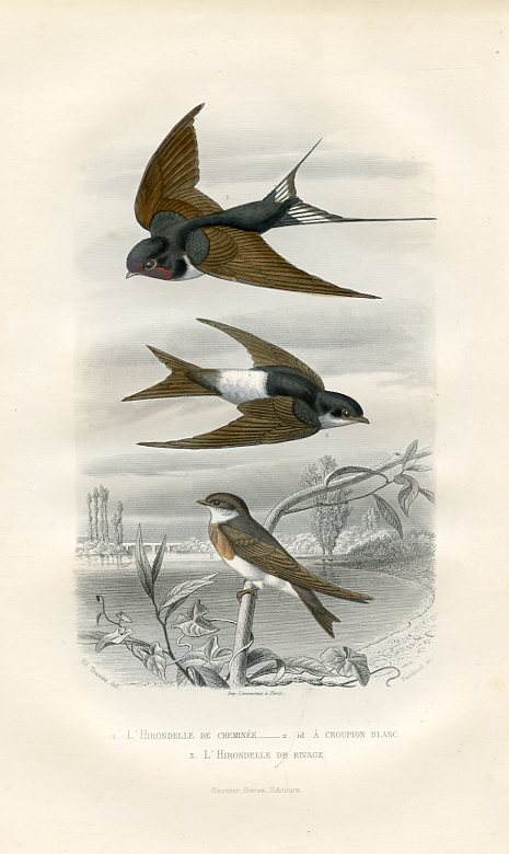 Swallows (L'Hirondelle)