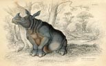 Mammal Prints - Rhinoceros (No. 22410009)