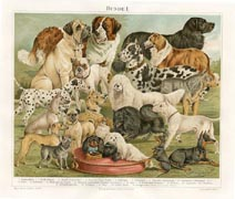 German Nature Prints - Dogs (No. 61310204)