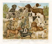 German Nature Prints - Hound Dogs (No. 61310209)