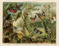 German Nature Prints - Insects (No. 61310221)