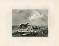 Greyhound Print (No. 30060006)