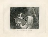 Sporting Dog Print (No. 30060009)