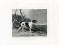 English Pointer Print (No. 30060012)