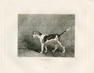 Sporting Dog Print (No. 30060015)